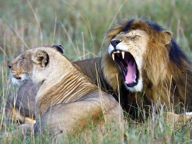 Suspected poacher eaten by lions in South Africa